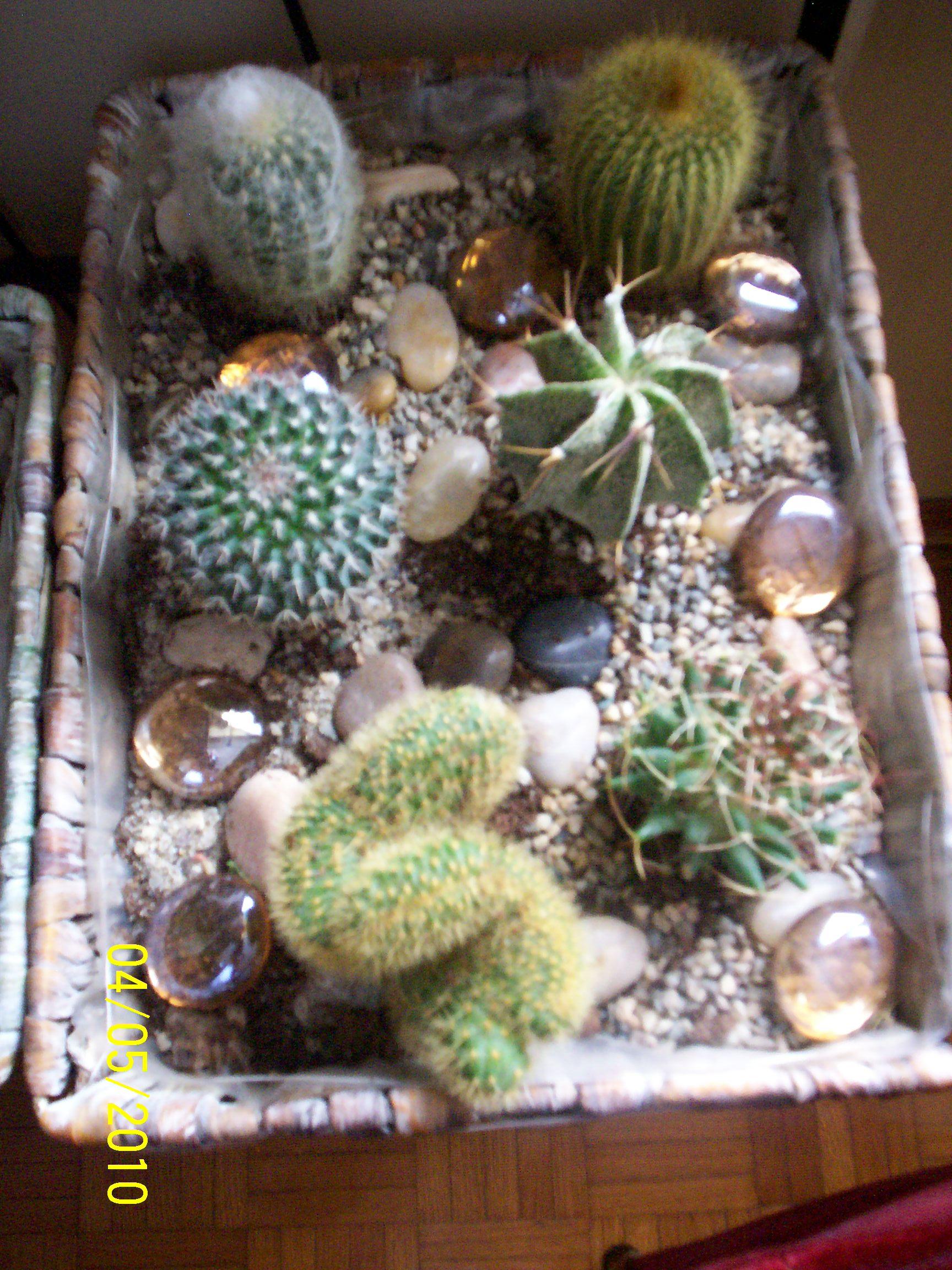 Mie piante grasse for Composizione di piante grasse in grande vaso